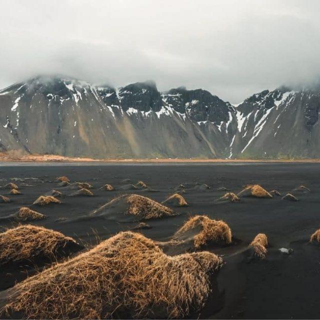 L'Islande reboise ses forêts