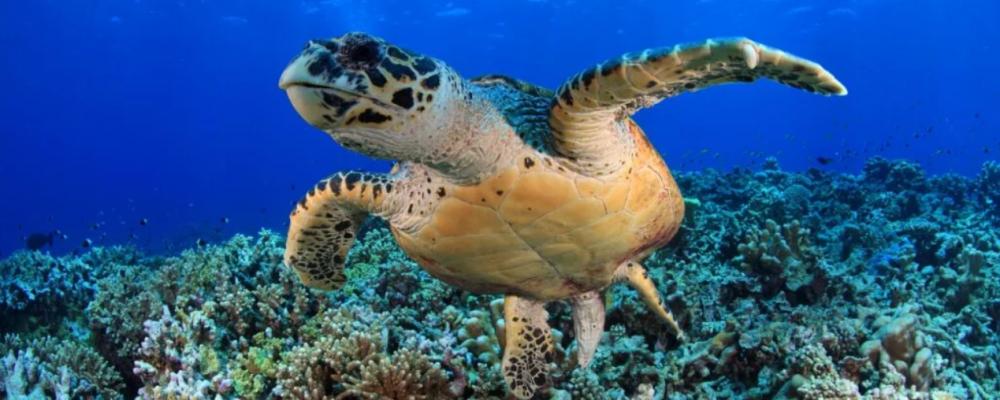 Rêver de tortues, la sagesse et la paix intérieure